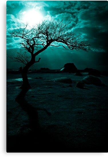 Midnight Sun by Andrew Paranavitana
