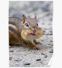 Funny Chipmunk Poster
