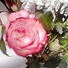 Rosa schönheit von sabelacarlos