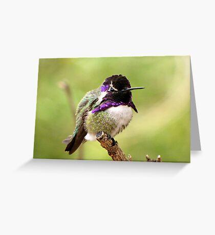 Costa's Hummingbird ~ Male Greeting Card