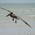 Landing Gear Down  by Karen  Moore