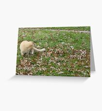 Cat Playing In The Leaves Greeting Card