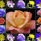 Sommer-Blumen-Collage, die Rose kennzeichnet von BlueMoonRose