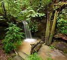 Sempervirens Falls-2 by Zane Paxton