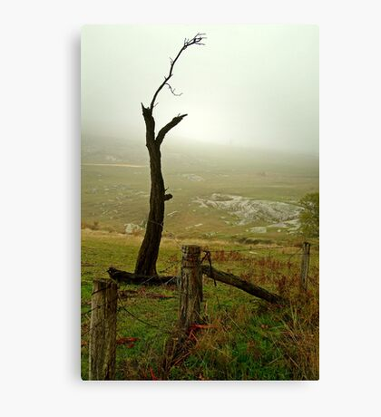 Macendon Ranges,A Damp Foggy Morning Canvas Print