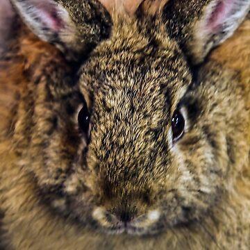 Year of the Rabbit!  by heatherfriedman