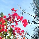 Beaut Blossums and Rowdy Rosellas by KazM