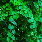Just Leaves by Heather Friedman