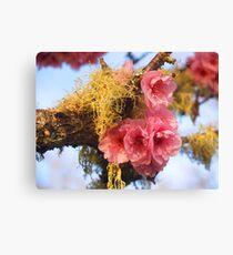 Moss blossoms Canvas Print