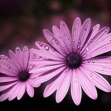 DEW DROPS ON DAISIES by valzart