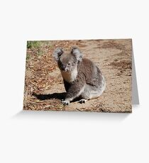Koala's on The Mornington Peninsula Greeting Card