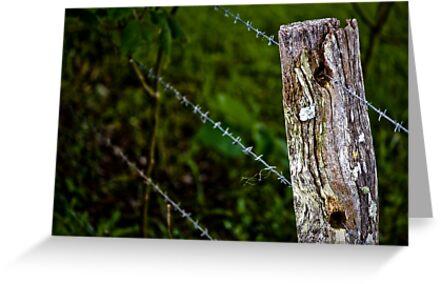 Fenceline by Daniel Peut