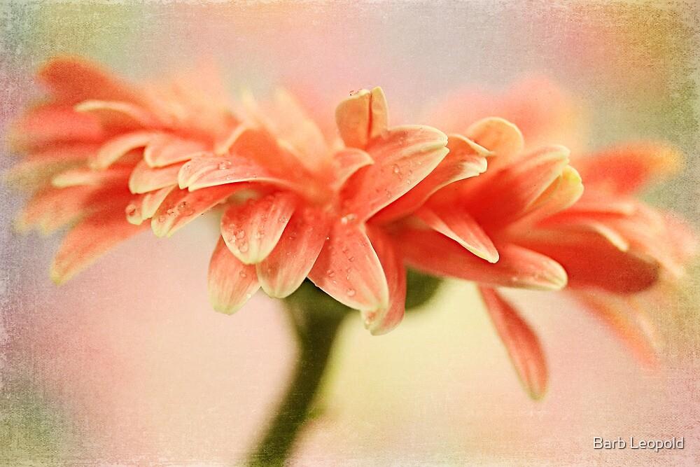 Gerbera Petals by Barb Leopold