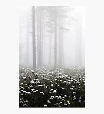 20.6.2015: Blooming Marsh Tea Photographic Print
