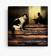 The Street Cat #0101 Canvas Print