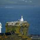 our neighbour, Penzance, Cornwall by BronReid