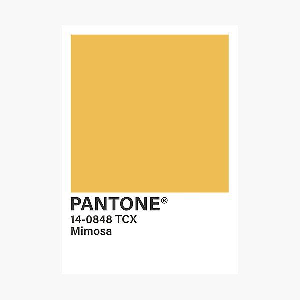 Mimosa Photographic Print