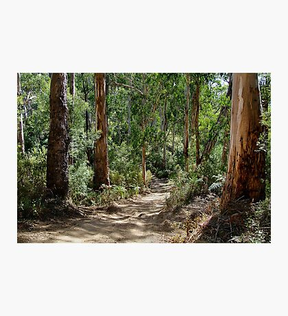 Newcomb Spur Track,Otway Ranges. Photographic Print