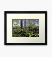 20.6.2015: Midsummer Greenery Framed Print