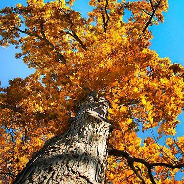 Oak Tree by rollosphotos