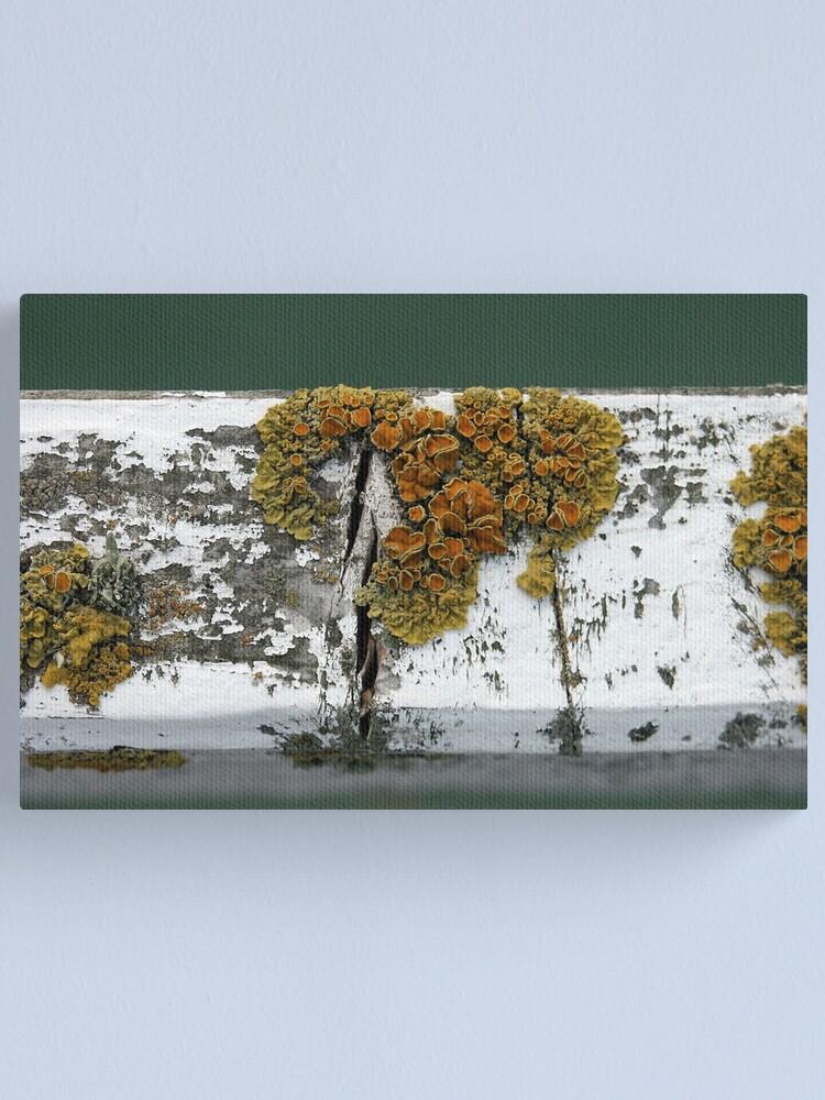 Alternate view of Lichen Canvas Print