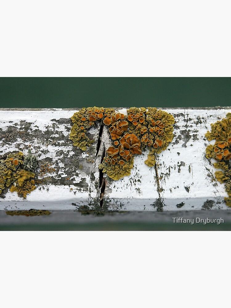 Lichen by Tiffany