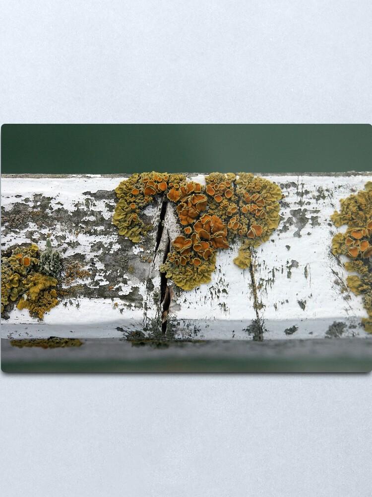 Alternate view of Lichen Metal Print