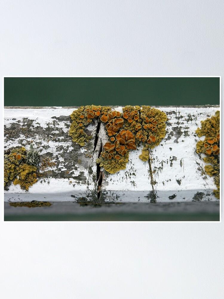 Alternate view of Lichen Poster
