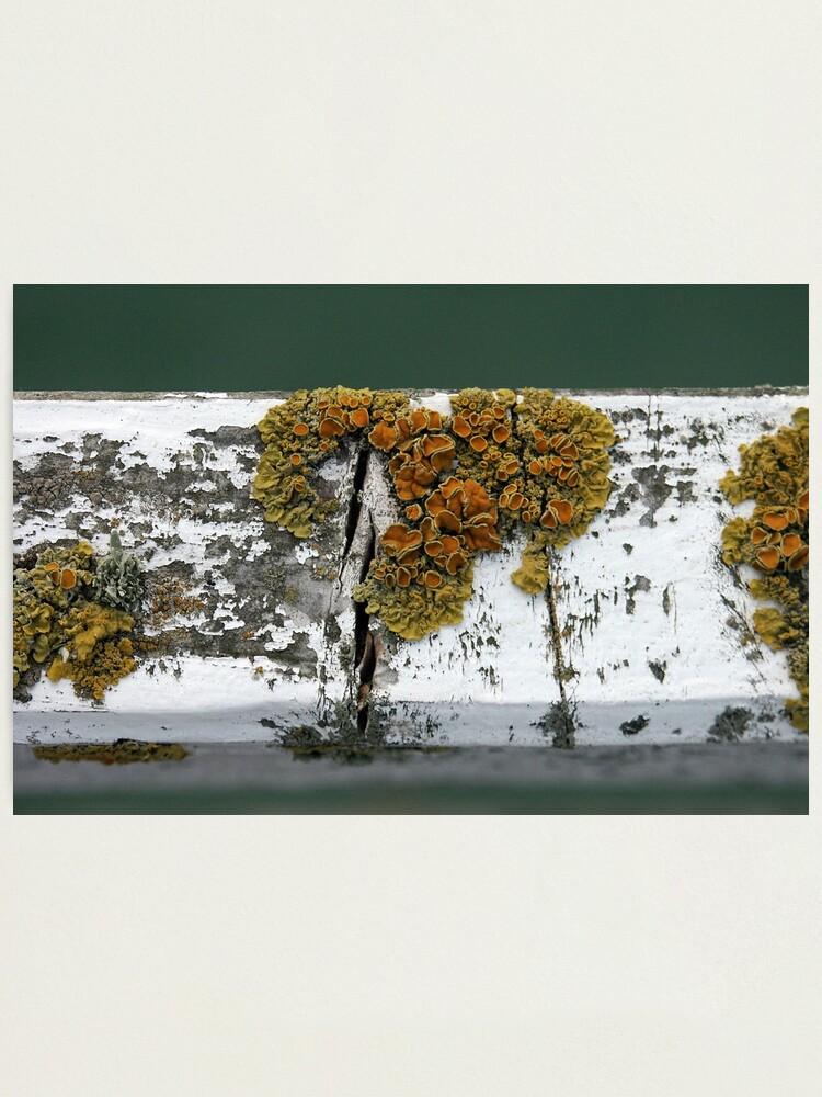 Alternate view of Lichen Photographic Print