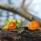 Small Jelly ear by relayer51