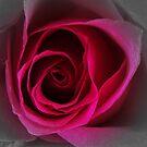 Blooming Red by debbiedoda