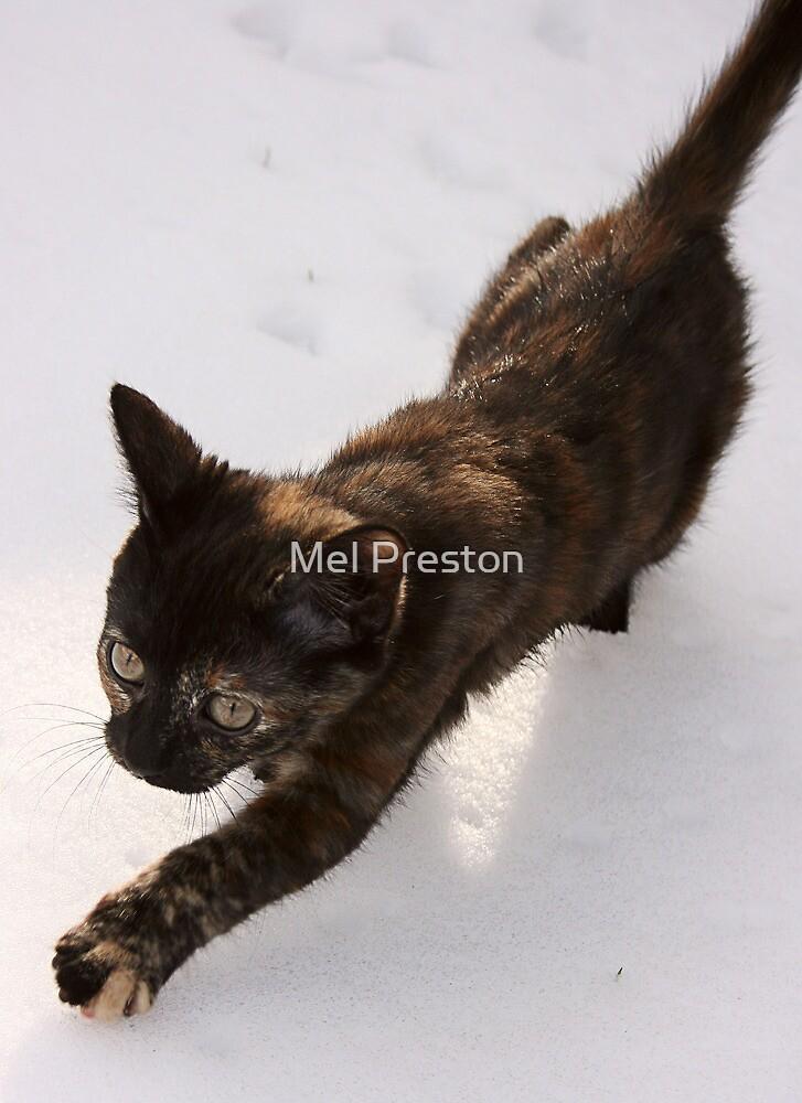 First Snow by Mel Preston