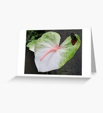 Butterfly on a Anthurium Greeting Card