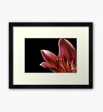 Lilly Light Framed Print