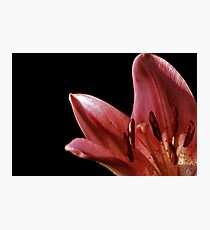Lilly Light Photographic Print