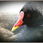 Moorhen  having a rest by Malcolm Chant