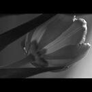 Shine... by GerryMac