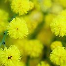 Yellow candy burst by mikeosbornphoto
