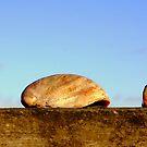 Seashells by mikeosbornphoto