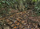 Stepping Stones by awefaul