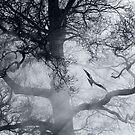 Smoke and Wings by MigBardsley