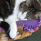 Sophia Sleeping Warm and Snug by Heather Friedman