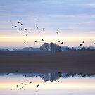 Reflecting Crows at Foxhill by MigBardsley