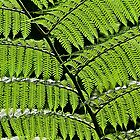 Hanging Feather Plant by John Butler