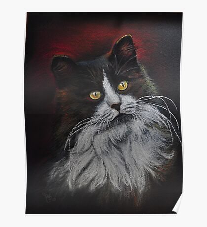 Longhaired cat I Poster