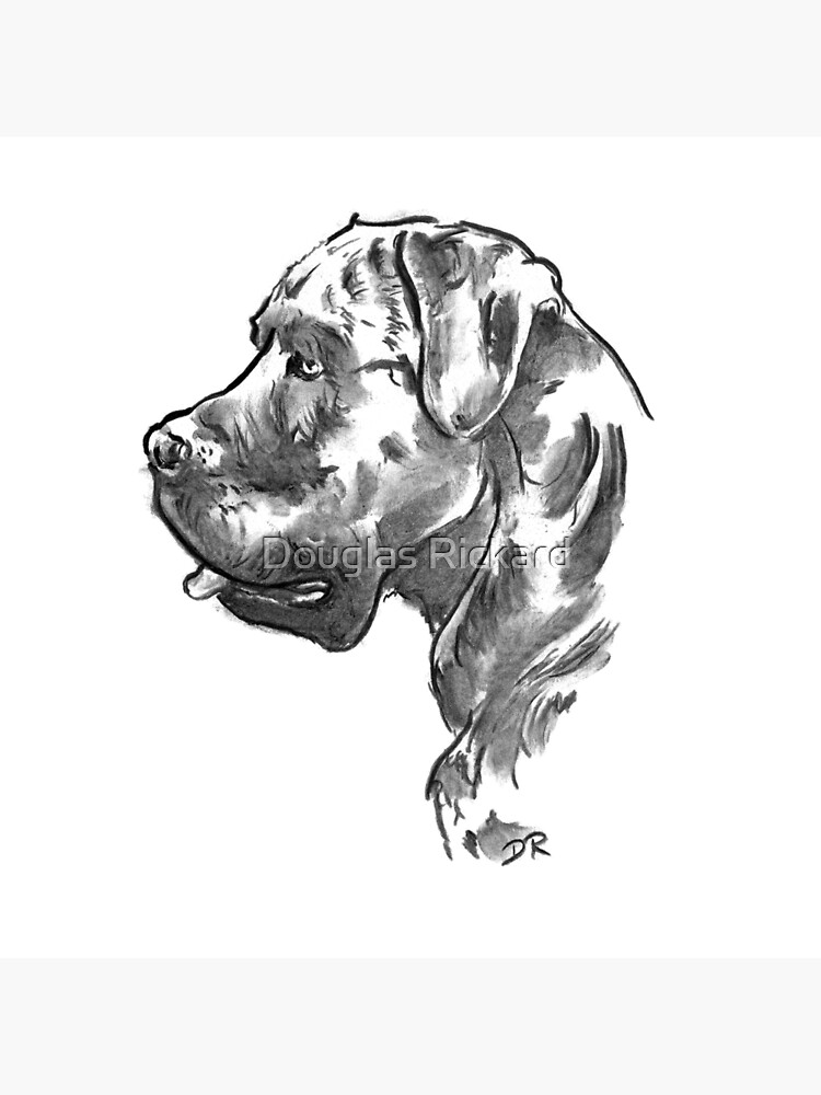 Cane Corso Drawing by douglasrickard