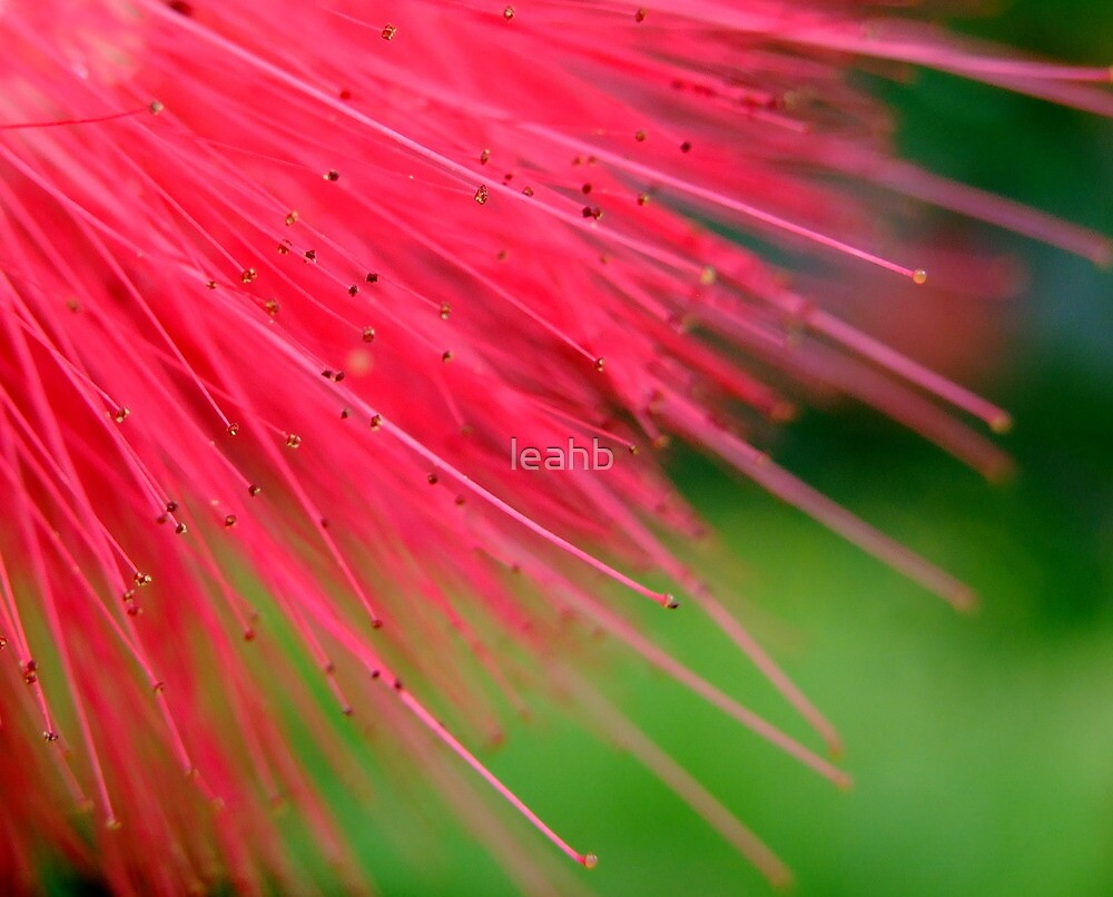 pink fluffy bits by leahb