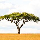 Tree Of Life - Acacia Vachellia Tortilis - Serengeti Plains 5101 East Africa by neptuneimages