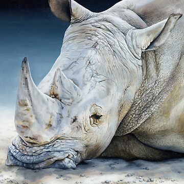 'Africa Dozing – White Rhino' square by MCColyer