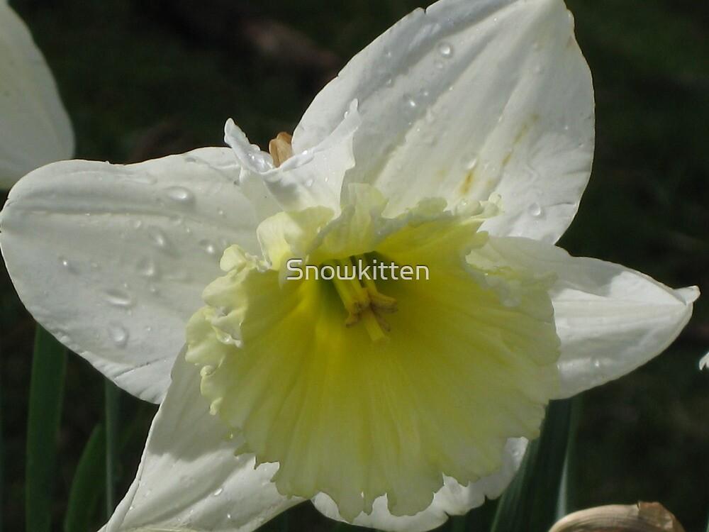 Daffodil by Snowkitten